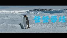 《帝企鹅日记2》今日上映发特辑 张歆艺狂喊袁弘带娃